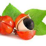 Le Guarana Fruit qui lutte contre la fatigue et donne de l'énergie